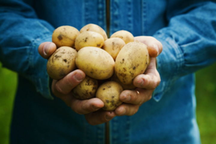 Normal csm hand vol aardappels 7dfb3600df