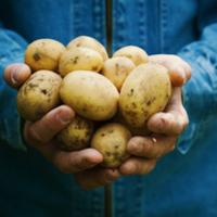 Thumbnail csm hand vol aardappels 7dfb3600df