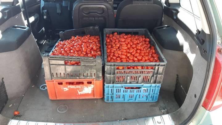 Normal tomaten
