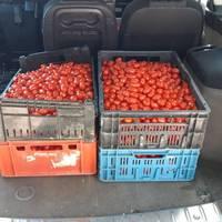 Thumbnail tomaten