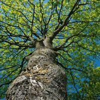Thumbnail treesforall