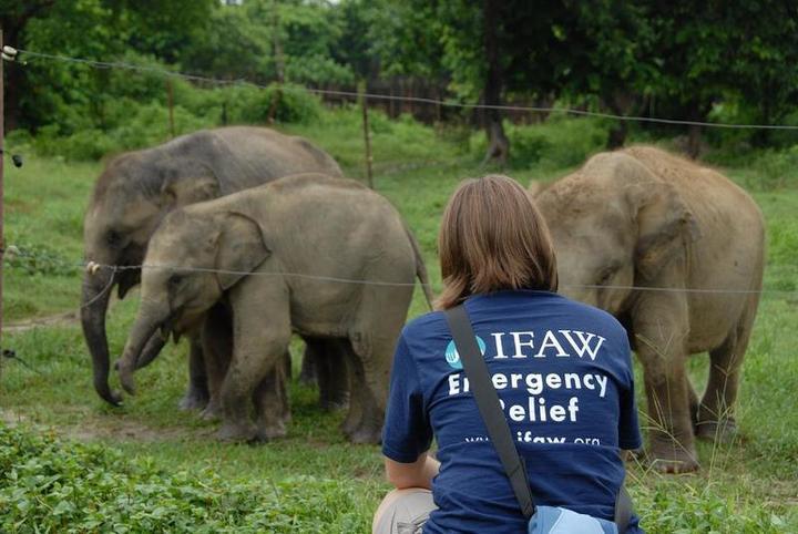 Normal olifanten