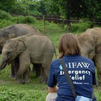 Thumbnail olifanten