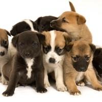 Thumbnail puppies
