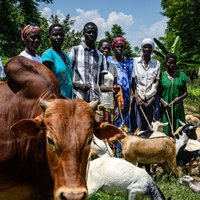 Thumbnail uganda resilience female farmers deserve better august 2019 mickael franci 23 e1574350119180 1199x599