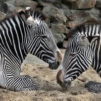 Thumbnail dierenpark artis