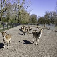 Thumbnail 20 04 1 foto hertenkamp stadspark