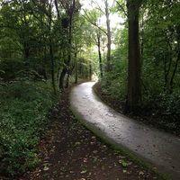 Thumbnail nieuwe scheveningse bosjes   panoramio